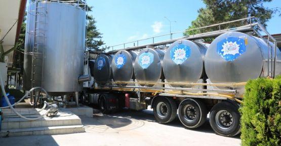 günlük 82 ton  süt  toplandı