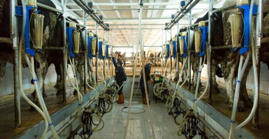 mart ayında günlük  67 ton süt toplandı