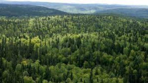 Orman projesi hizmeti satın alınacak