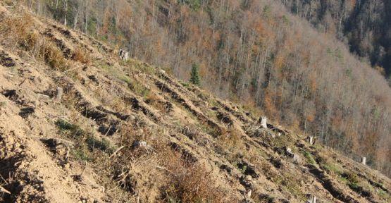 Suni tensil projesi arazi hazırlığı işi hizmeti alınacak